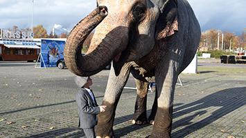 Alfons und Elefantenkuh Carla vom Circus Carl Busch auf dem Cannstatter Wasen. Foto: Plapp/STUGGI.TV