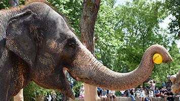Elefant in der Wilhelma, Foto:STUGGI.TV