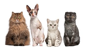 Warum ist euer Haustier das coolste überhaupt? (Foto: Clipdealer)