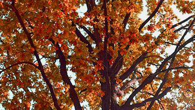 Ode an den Herbst: Warum der Herbst die schönste Jahreszeit ever ist. Foto: STUGGI.TV
