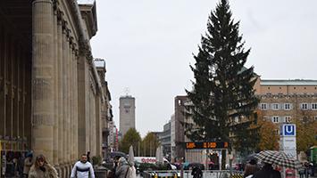 Der Weihnachtsbaum auf dem Schlossplatz in Stuttgart steht. (Foto: STUGGI.TV)